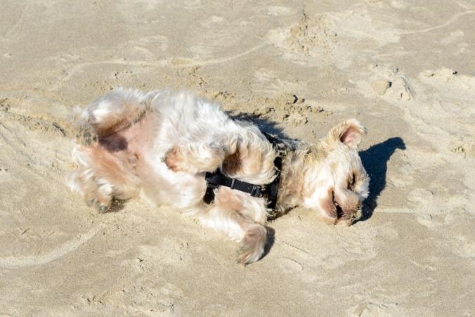 TiVo Sand Washing